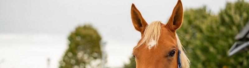 Marijn-Buijtendorp-dierenarts-paard