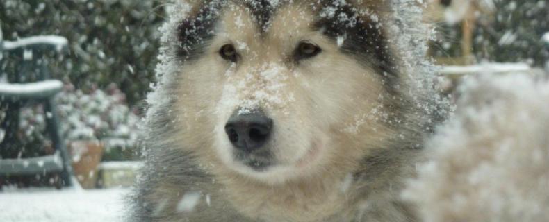 Hond-en-sneeuw-en-vorst