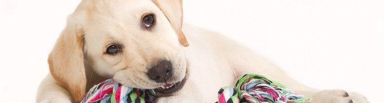 Pup-nieuw-in-huis