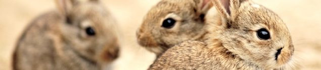 Herfsttips-konijn