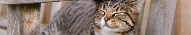 Vergiftiging-kat