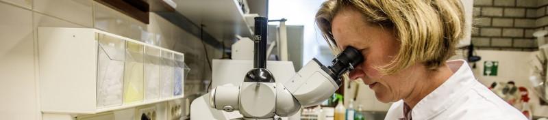 Wormonderzoek-hond-laboratorium-Horst