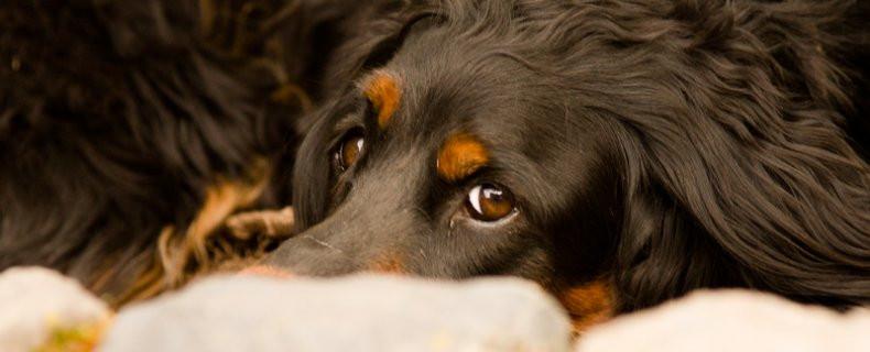 Natuurlijke-pijnstilling-hond