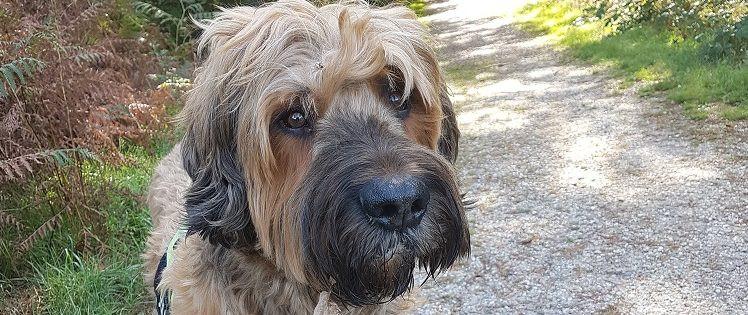 Herfsttips-hond