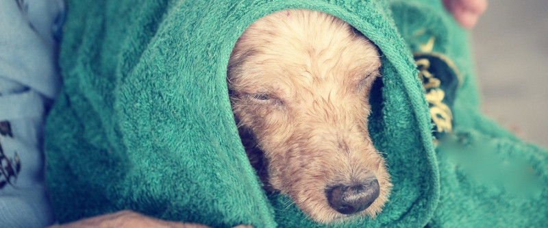 Huidaandoening-hond-wassen