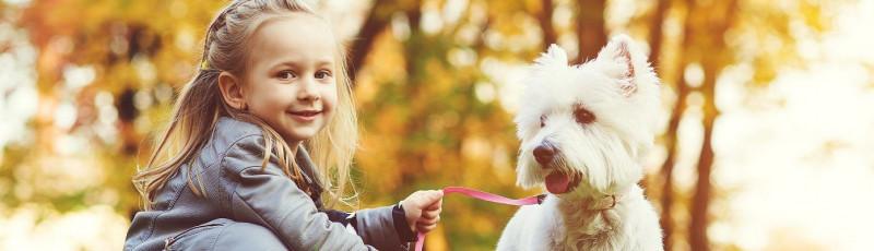 Traanstreep-witte-hond
