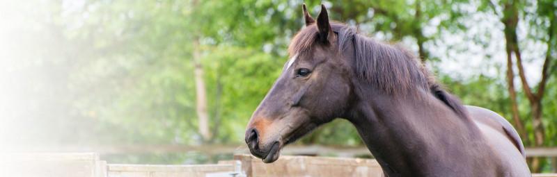 Tetacheck-paard